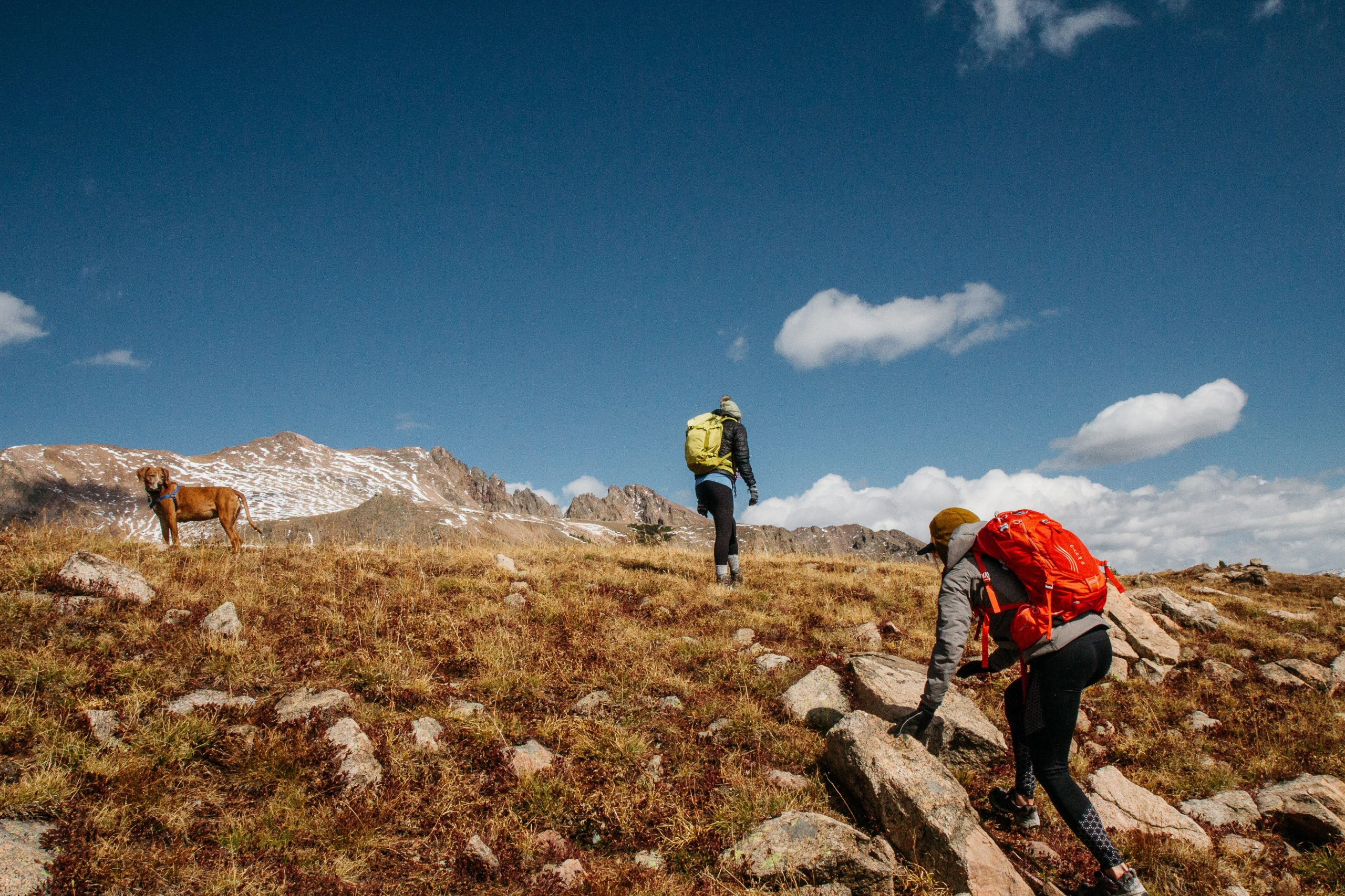 two hikers and brown dog hiking on mountain under blue sky during daytime